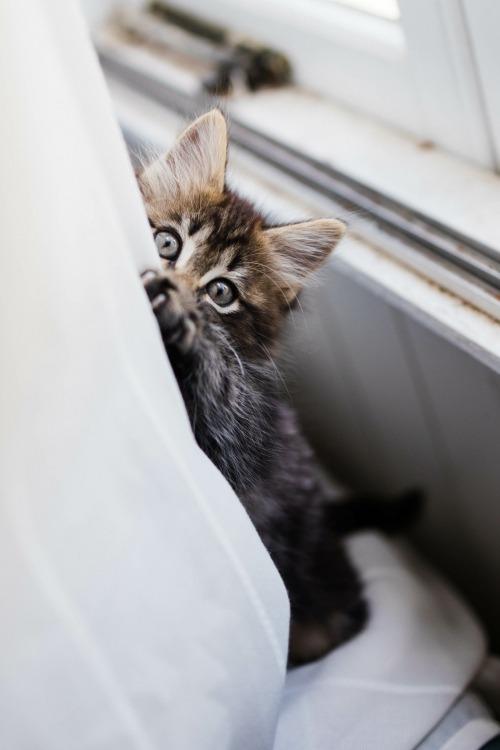 Wil je kat zijn krabpaal niet gebruiken?