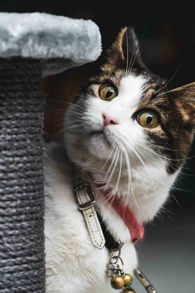 The new generation of scratching posts: why these are much better for your cat