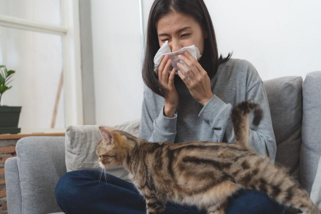 Kattenallergie: weil blah blahdit is het en zo los je het op
