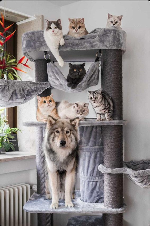 Cat tree journal | The best cat tree